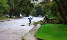 Equipes retiram árvore que caiu na Avenida Borges de Medeiros Foto: Reprodução/TV Globo