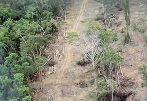 STF decidiu pela não punição por desmatamentos ilegais anteriores a 2008, numa vitória dos ruralistas Foto: Eliária Andrade / Agência O Globo/26-5-2011