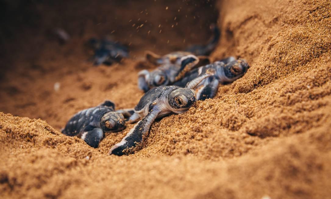 O Mar Mediterrâneo é importante para três espécies de tartarugas marinhas: a tartaruga-de-couro, a verde e a cabeçuda. Elas estão seriamente ameaçadas pelas mudanças climáticas, que afetam seus locais de alimentação e reprodução. O aumento do nível do mar também pode alterar ou destruir os locais dos ninhos. Foto: Divulgação / Jonathan Caramanus/WWF