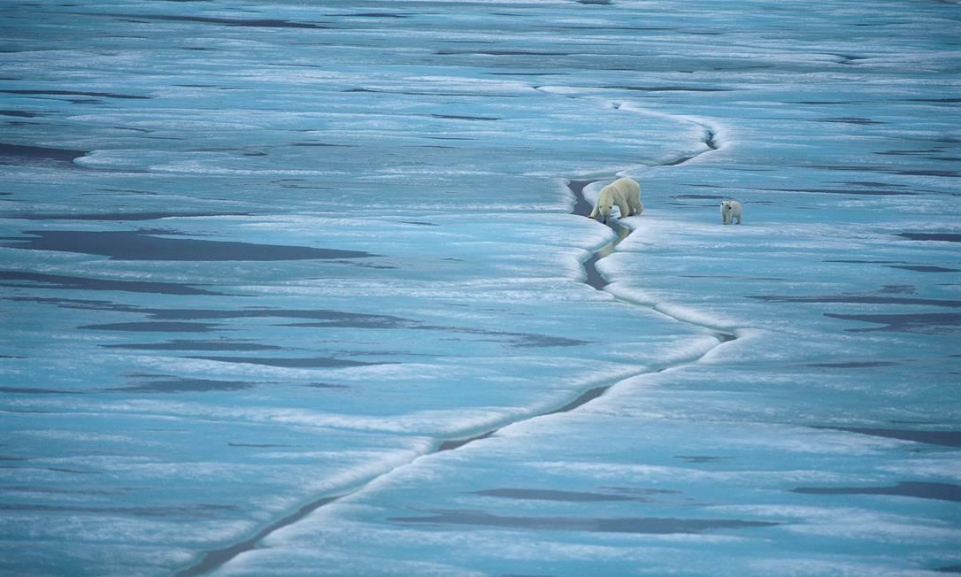 Ambientalistas estudam como desenvolver uma rede no Ártico de áreas marinhas para apoio à biodiversidade. O WWF também investiga como o hábitat do gelo marinho dos ursos polares mudará nos próximos anos. Foto: Divulgação / Staffan Widstrand/WWF