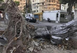 Árvores continuam caídas pelas calçadas da via Foto: Divulgação/Camila Taboada