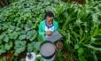 Coleta de água da chuva no Rio Tana, no Quênia: é preciso olhar com atenção para as práticas de comunidades indígenas e tradicionais para desenvolver tecnologias, diz estudo Foto: Georgina Smith / Divulgação/Georgina Smith/CIAT
