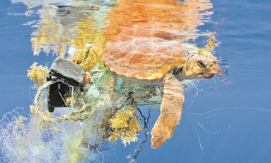 Tartaruga marinha envolta em lixo: poluição do mar é uma das principais preocupações dos pesquisadores envolvidos na construção do AIR Center, que pretende estudar efeitos da intervenção humana no Atlântico Sul Foto: Sergio Hanquet/Biosphoto