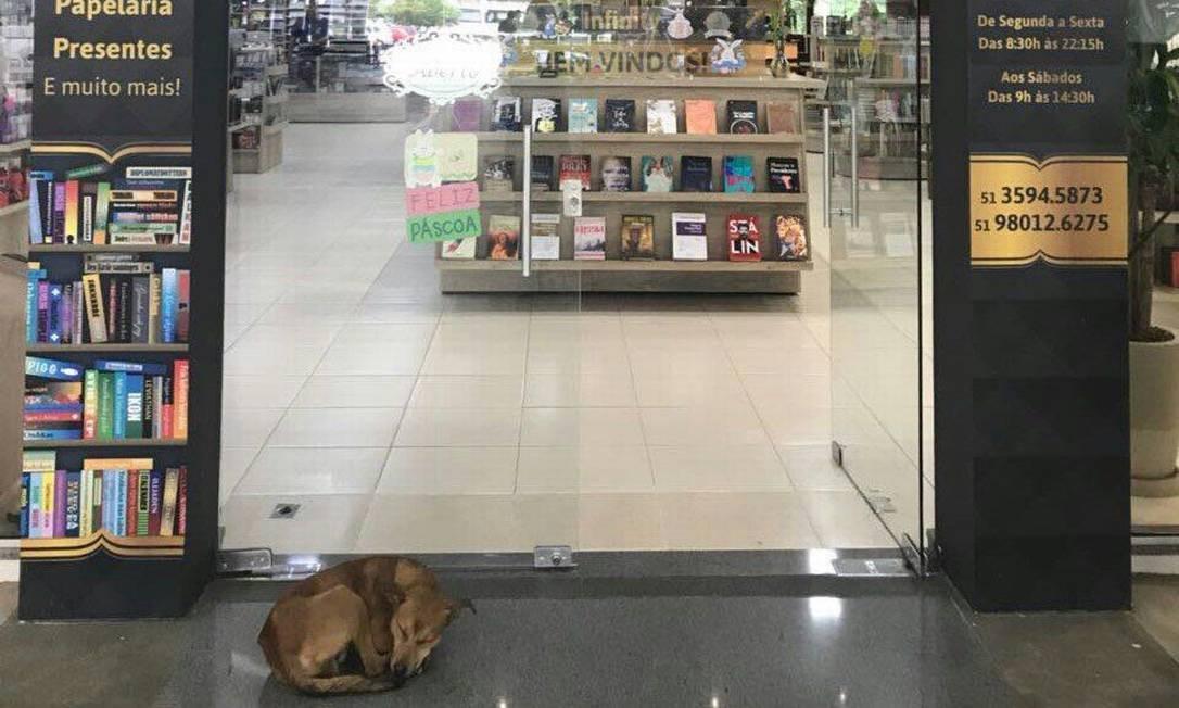 O cão abandonado, que mora no campus da Universidade, dorme em frente à livraria Foto: Divulgação / Livraria Infinity