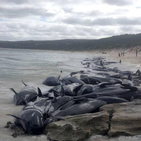 Mais de 150 baleias-piloto ficaram encalhadas em Hamelin Bay, na Austrália Foto: Divulgação / Departamento de Conservação da Biodiversidade e Atrações da Austrália Ocidental / AFP