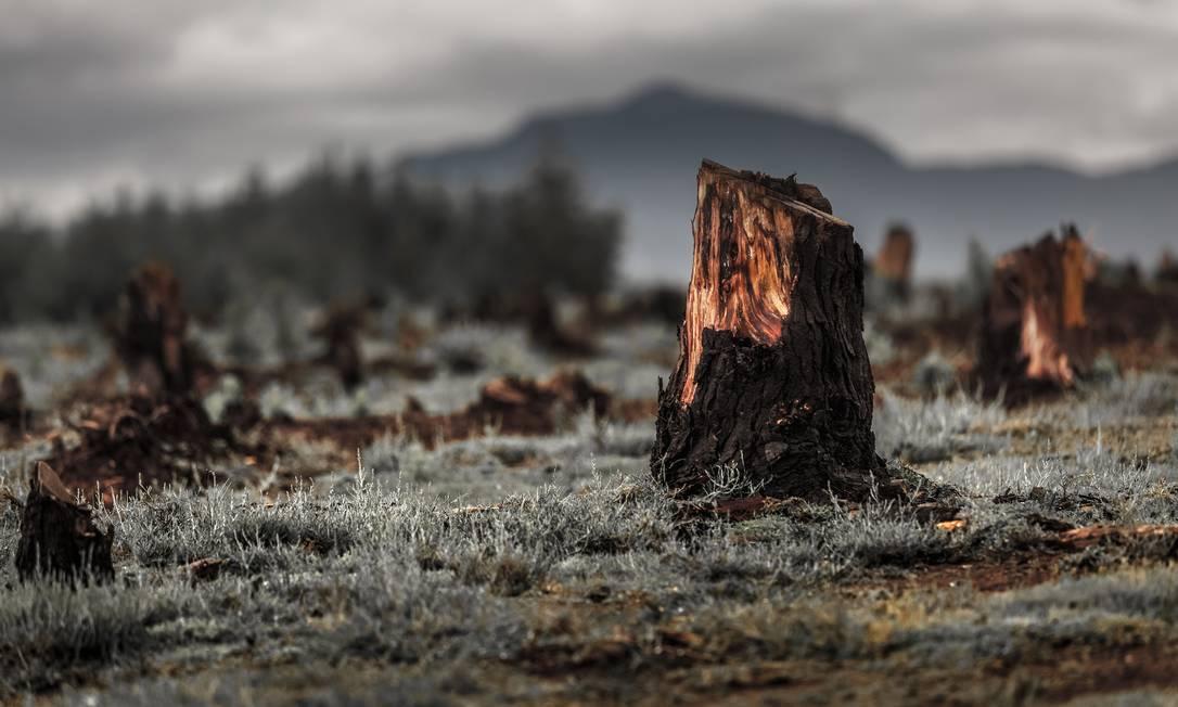 Desflorestamento para o avanço de terras cultiváveis em Madagascar Foto: / Dudarev Mikhail/Shutterstock.com