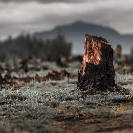 Desflorestamento para o avanço de terras cultiváveis em Madagascar Foto: Dudarev Mikhail/Shutterstock.com