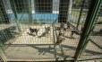 Cães ficam a espera de um lar