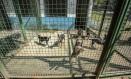 Cães ficam a espera de um lar Foto: eduardouzal / Agência O Globo