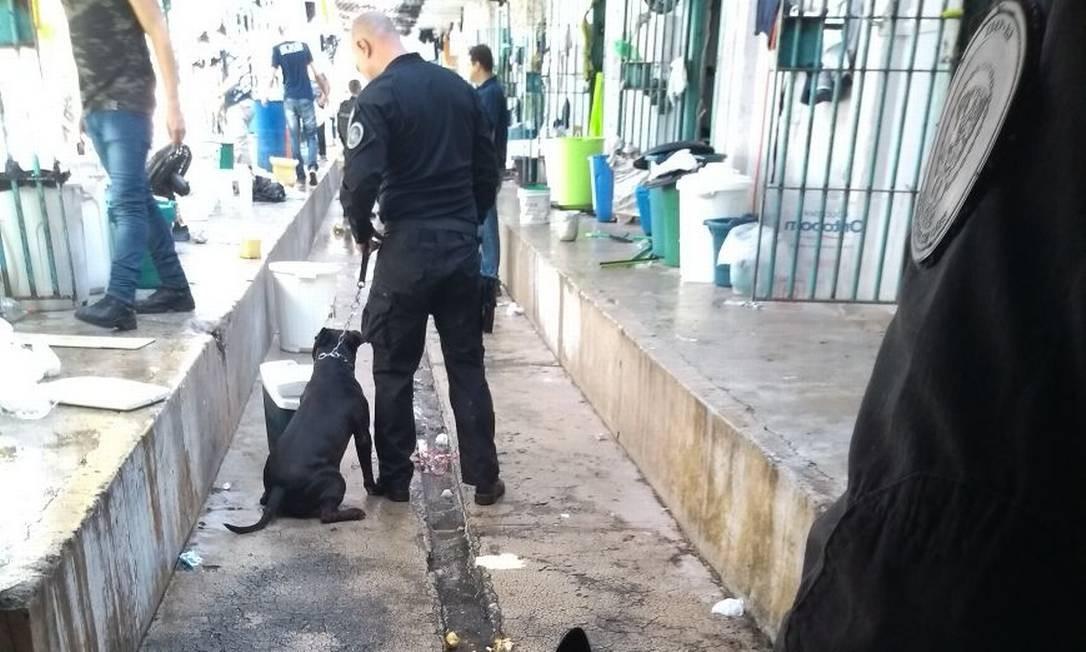 Com auxílio de cães, agentes penitenciários fazem revista em celas de Bangu 3 Foto: Reprodução