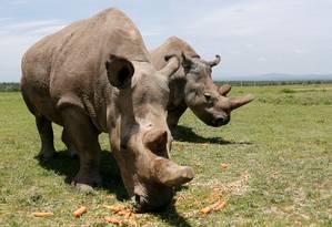 Rinoceronte no Quênia Foto: THOMAS MUKOYA / REUTERS