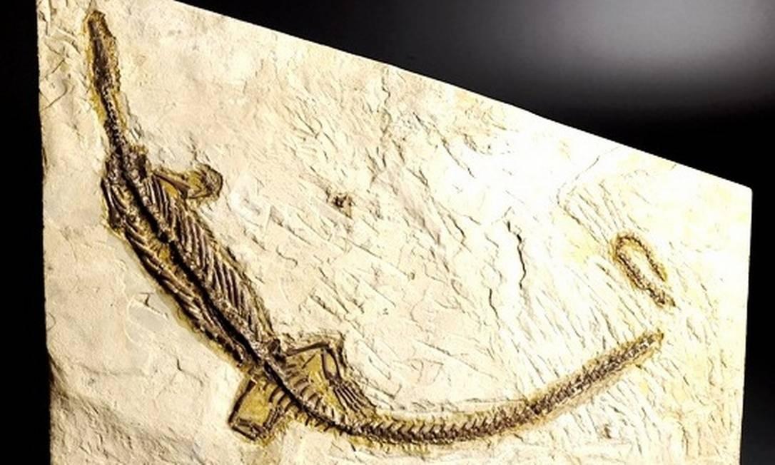 3. Museu Nacional - Zoologia. Paleontologia. Antropologia Biológica. A instituição é um dos espaços mais completos para se aventurar pela Biologia no Rio. Mesclando exposições fixas e temporárias, o museu tem um acervo vasto com fósseis de aves, mamíferos brasileiros, insetos, dinossauros e até múmias. No local, é possível encontrar Luzia, o esqueleto humano mais antigo encontrado no Brasil e reconstituído artificialmente na Inglaterra, ou até mesmo espécies mais distantes, como o patrimônio extenso de crustáceos e moluscos Foto: Divulgação