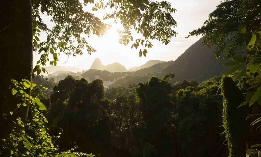 5. Parque Nacional da Tijuca (Parna Tijuca) - Com 3.953 hectares de Mata Atlântica, a área é a maior floresta urbana do mundo replantada artificialmente, além de ser o parque nacional mais visitado do país, com três milhões de turistas por ano. Esses números gigantes são proporcionais à biodiversidade da área, com 1.619 espécies vegetais - 433 delas ameaçadas de extinção - e 63 espécies de mamíferos de médio e pequeno porte. Ele pode ser acessado por várias zonas do Rio e tem programas para quase todos os públicos, como cachoeiras, escalada, trilhas, ciclismo e áreas para piquenique. Para os estudantes, as visitas guiadas, gratuitas todas as quartas, podem ser interessantes Foto: Fotolia