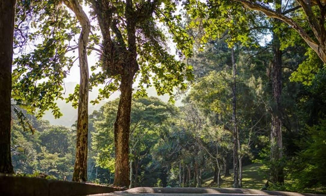 9. Parque da Cidade - O parque tem área de 470 mil metros quadrados. Como Unidade de Conservação de Proteção Integral, a área tem vegetação típica da Mata Atlântica, como pau-ferro, pau-brasil, ipê-amarelo e quaresmeira, ao mesmo tempo em que guarda espécies não pertencentes ao bioma, como o pândano e o pinheiro-do-paraná. Entre jardins e mata fechada, o lugar é uma boa oportunidade para conhecer de perto a vegetação carioca original Foto: Divulgação