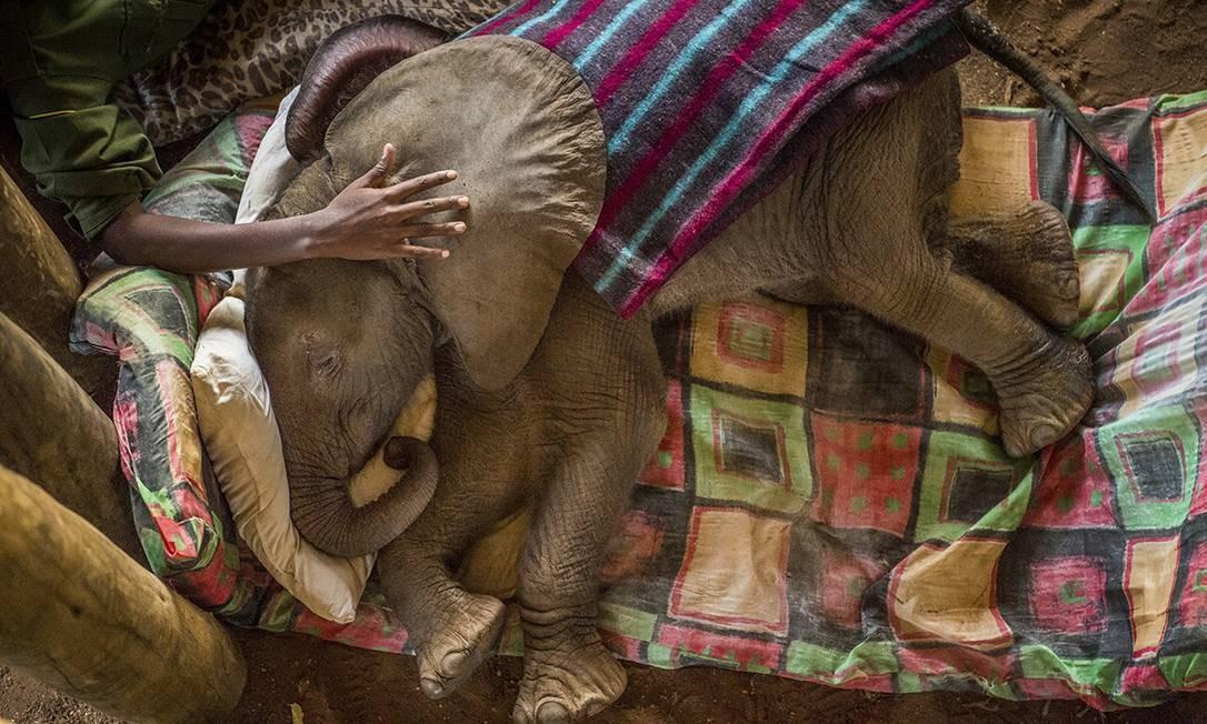 Imagem de Ami Vitale, da National Geographic, ganhou o primeiro lugar na categoria Natureza; foto mostra elefante filhote resgatado recebendo cuidados no Quênia Ami Vitale for National Geographic / AP
