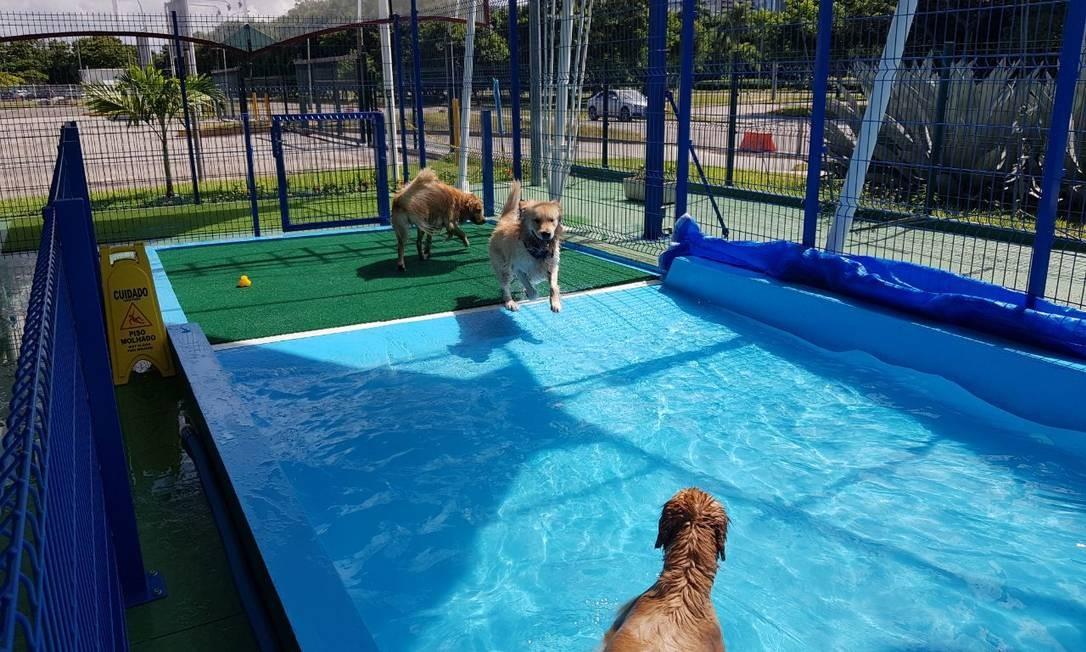 Na Dog Station, os cães podem brincar à vontade na piscina enquanto os donos fazem as compras Foto: Jaime Rocha/divulgação