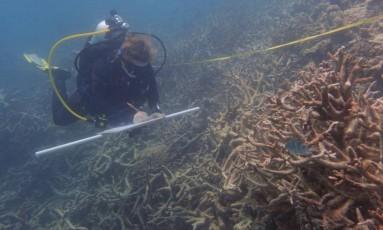 Pesquisador anota danos provocados por onda de carol em corais Foto: Divulgação/Universidade James Cook