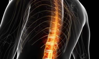Ilustração em 3D da medula espinhal: testes com animais mostraram que substância pode reabilitar nervos lesionados Foto: Shutterstock/Sebastian Kaulitzki