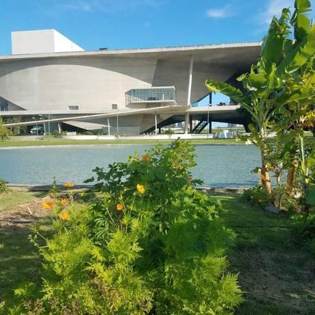 Uma horta foi plantada há cerca de dois anos na Cidade das Artes Foto: Bianca Klein/Divulgação