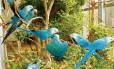 A ararinha azul, natural da Bahia, foi extinto na natureza e restam poucos exemplares em cativeiro Foto: Al Wabra Wildlife Preservation / Divulgação