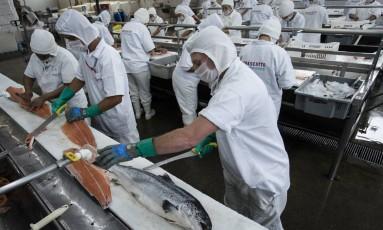Fábrica de peixeis em Duque de Caxias, no Rio de Janeiro Foto: Fernando Lemos/Agência O Globo/08-07-2015