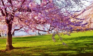 É primavera: estação tem condições meteorológicas perfeitas para um dia no computador Foto: Divulgação/Free Images