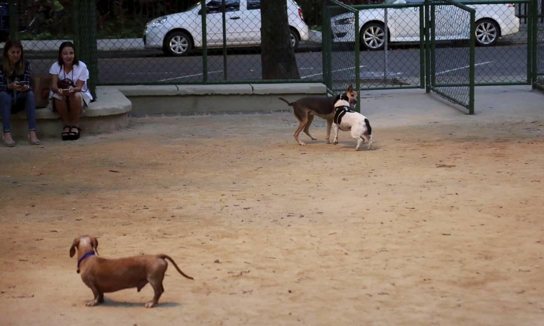 Área reservada para cães na Praça Cláudio Coutinho, no Leblon Foto: Marcos Ramos / Agência O Globo
