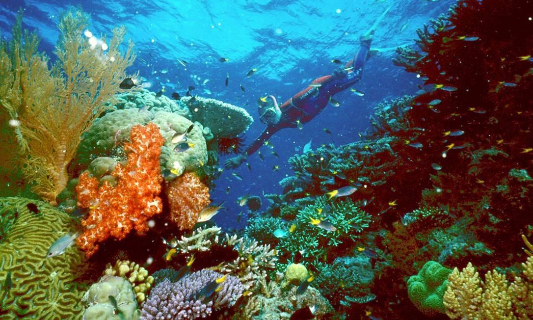 Fundo do mar na Grande Barreira de Corais tem diversidade ameaçada Foto: Reuters/02-06-2003