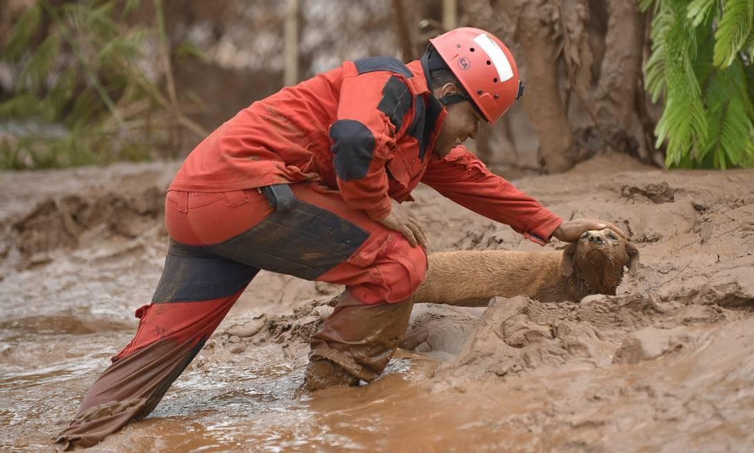 Agente do Corpo de Bombeiros tenta salvar cão após rompimento de barragem em Mariana Foto: Douglas Magno
