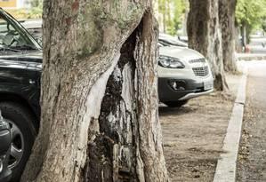 A Amgra pediu inspeções à Comlurb e ao Jardim Botânico: árvores não podem ser cortadas Foto: Agência O Globo / hermes de paula/23-11-2017