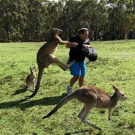 Homem é atacado por cangurus após se aproximar para alimentá-los, perto do Morisset Park, na Austrália Foto: Kroosn Shuttle Service Pty Ltd / Reuters