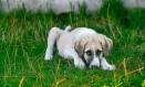 Cachorro em busca de adoção no Rio Foto: Divulgação