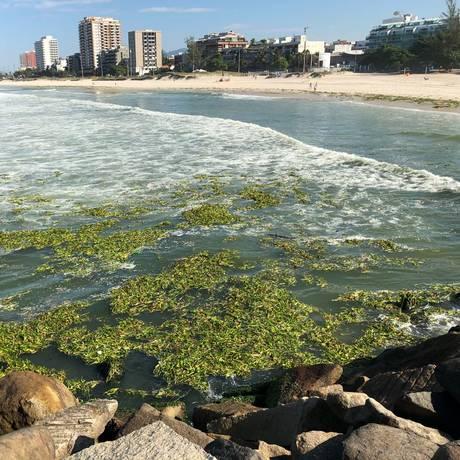 Gigogas na praia da Barra da Tijuca na manhã desta quarta-feira. Foto: Foto do Leitor/ Mario Moscatelli