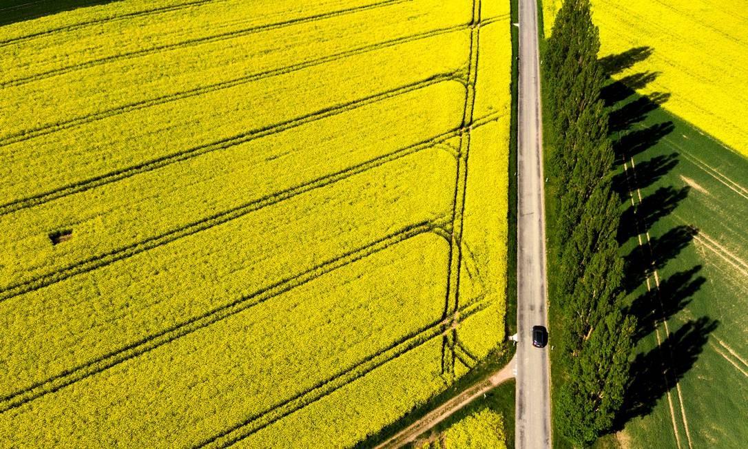 E quem passa apressado por essa estrada em Daillens, nos arredores de Lausanne, na Suíça, perde o impacto desse tapete amarelo, formado por plantações de flores. Foto: Laurent Gillieron / Keystone / AP