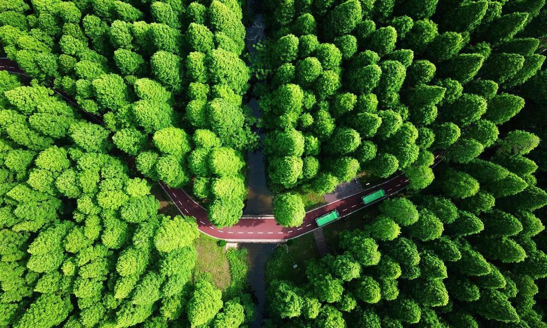 E possível apreciar a beleza do Parque Florestal Nacional do Mar Amarelo, em Dongai, no leste da China, percorrendo sua cênica estrada, engolida por uma infinidade de árvores. Mas do alto, a paisagem impressiona ainda mais. Foto: AFP