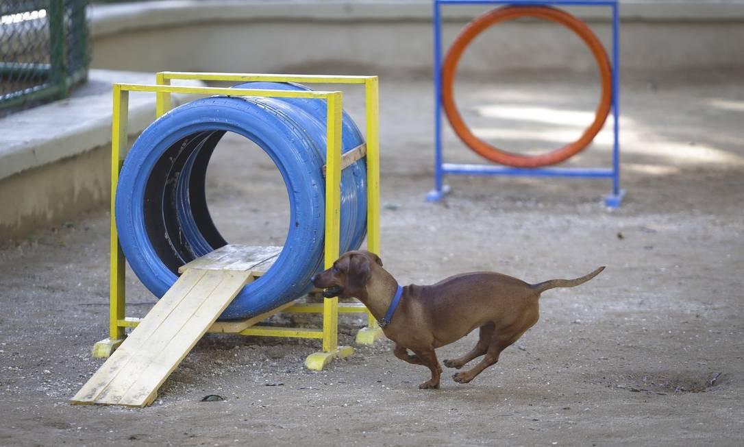 Após polêmica com moradores, prefeitura inaugura parque para cães em praça no Leblon