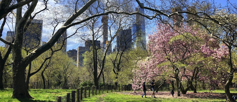 Parte dos prédios de Manhattan vistos do Central Park, em Nova York, que fica especialmente bonito na primavera Foto: Daniel Marenco / O Globo
