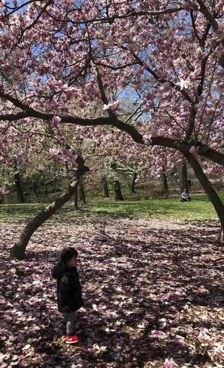 ... e cobre o chão ao redor de suas árvores Foto: Daniel Marenco / O Globo