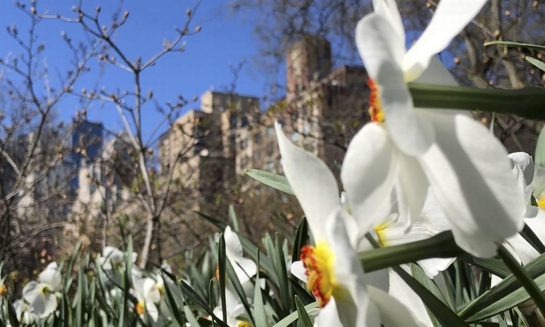 Para quem gosta de flores, o parque é um programa indispensável durante a primavera Foto: Daniel Marenco / O Globo