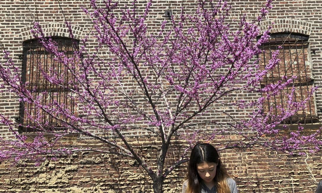 Mas não só no parque. As flores conquistam seu espaço pelas ruas da cidade Foto: Daniel Marenco / O Globo