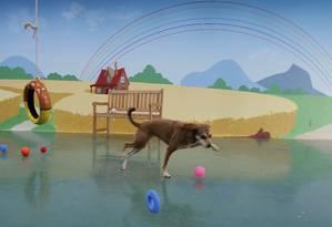 Espaço só não recebe cães considerados agressivos Foto: Marcelo Theobald / Agência O Globo