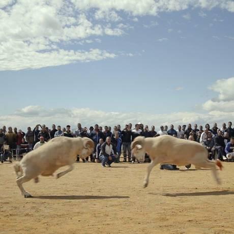 'Sobre ovelhas e homens', de Karim Sayad Foto: Divulgação