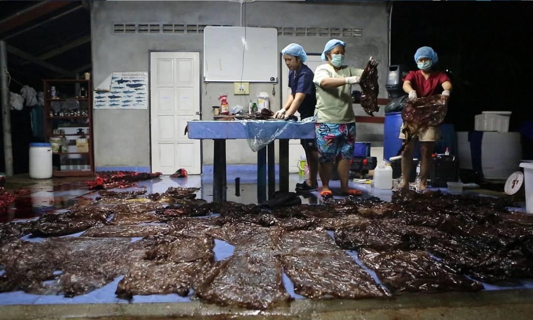 Foto fornecida pela organização ThaiWhales mostra as dezenas de sacolas plásticas retiradas do estômago da baleia morta Foto: / AFP/WWW.THAIWHALES.ORG