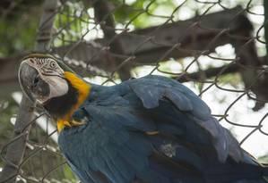 Sem grades. Os animais vão ter mais liberdade após a obra Foto: Agência O Globo / Analice Paron/05-02-2017