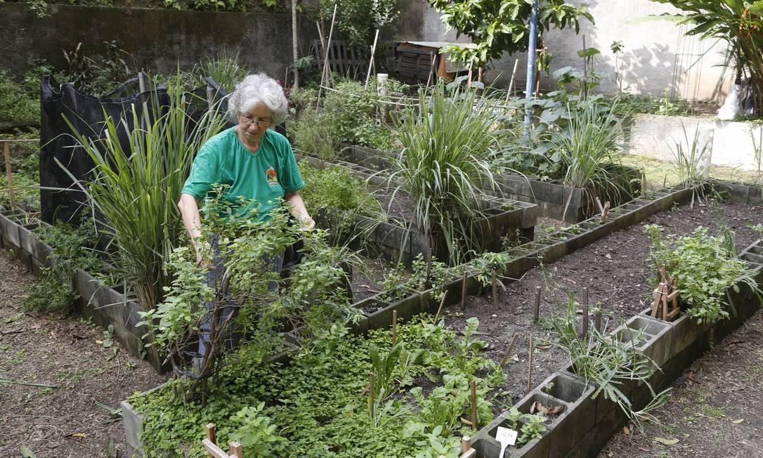 Sônia Miranda na horta comunitária do Cosme Velho: há cinco anos ela cuida da plantação de verduras Foto: Fábio Guimarães / Agência O Globo
