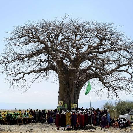 Foto de arquivo mostra um baobá em Oltukai, na Tanzânia Foto: TONY KARUMBA / AFP