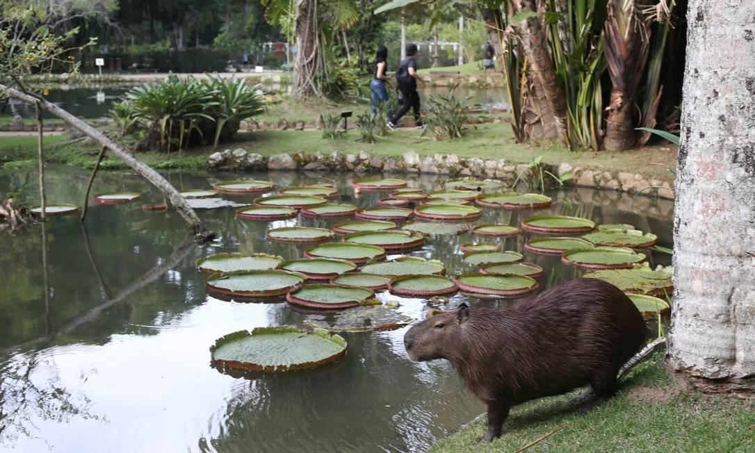 Essas são algumas das novidades tecnológicas e de visitação do pacote que o Jardim Botânico lança quarta-feira, ao soprar as velinhas de seus 210 anos de fundação Foto: Pedro Teixeira / Agência O Globo