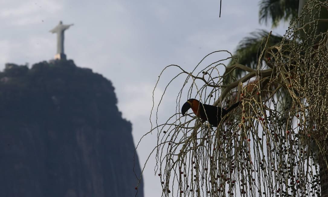 O Jardim Botânico foi fundado em 13 de junho de 1808, por decisão do então príncipe regente Dom João de instalar ali uma fábrica de pólvora e um jardim para aclimatação de espécies de vegetais originárias de outras partes do mundo Pedro Teixeira / Agência O Globo