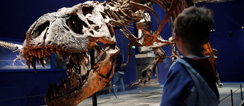 Trix está em exibição no Museu de História Nacional de Paris, na França Foto: PHILIPPE WOJAZER / REUTERS
