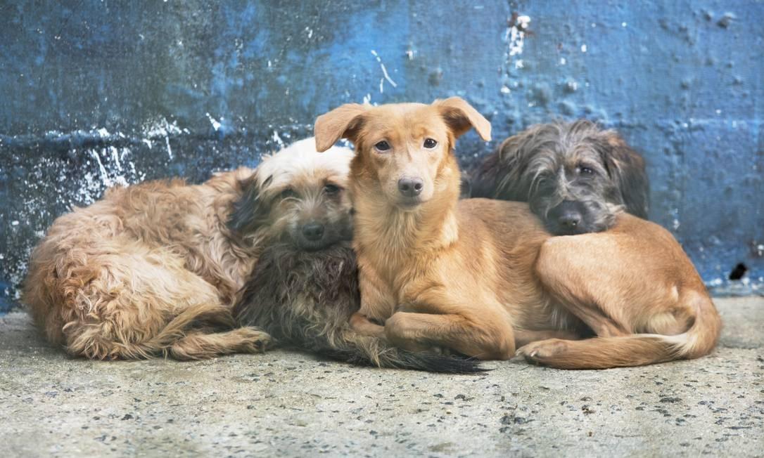 Lily, Lala e Heitor foram deixados no abrigo Foto: Ana Branco / Agência O Globo